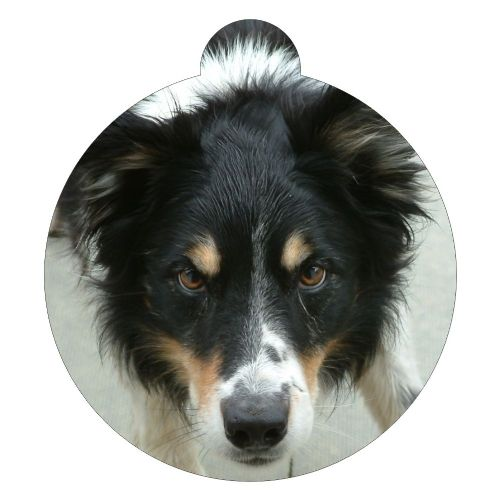 Border Collie Picture ID tag